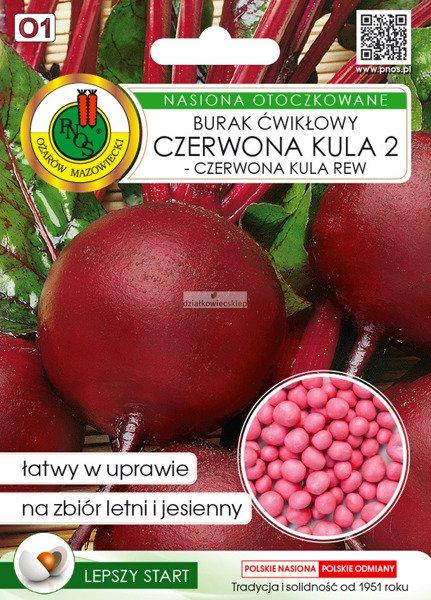Burak Ćwikłowy Czerwona Kula 2 - Czerwona Kula Rew (100 nasion)  - nasiona otoczkowane
