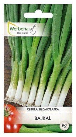 Cebula siedmiolatka Bajkal (Allium fistulosum L. ) 2g