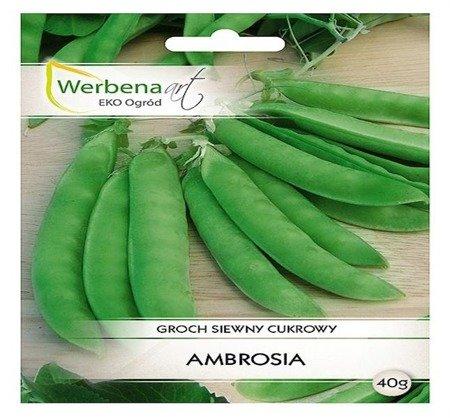 Groch siewny cukrowy Ambrosia (Pisum sativum L.) 30g