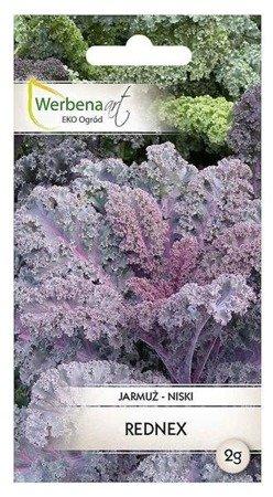 Jarmuż Rednex (Brassica oleracea L.) 2g