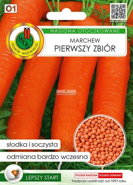 Marchew jadalna Pierwszy Zbiór (300 nasion)  - nasiona otoczkowane