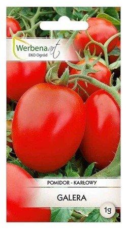 Pomidor karłowy gruntowy Galera (Lycopersicon esculentum Mill) 1g