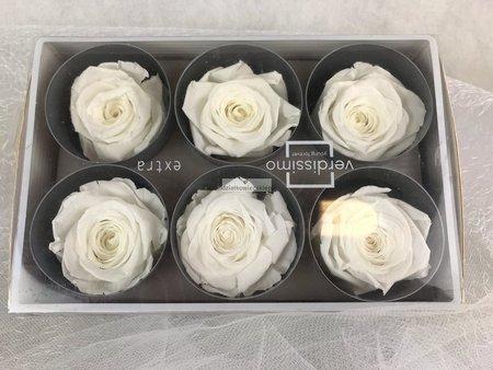 Róże wieczne (białe) 6 cm