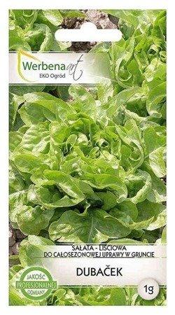 Sałata liściowa Dubacek (Lactuca sativa L.) 1g