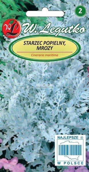 Starzec popielny, mrozy - liście sinozielone gęsto owłosione (0,2 g)